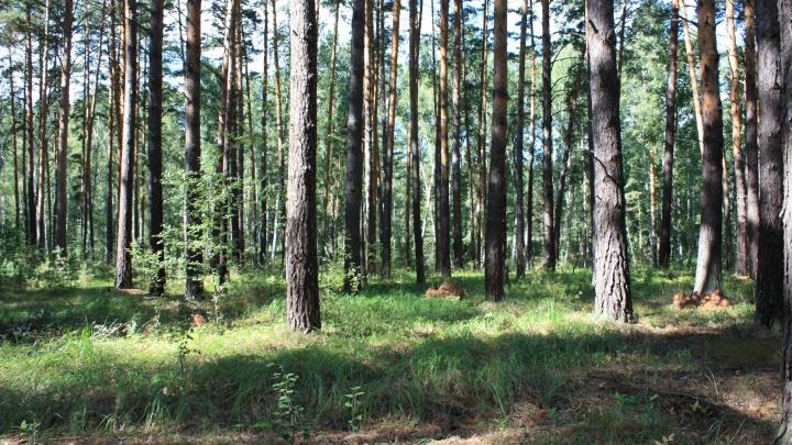 В Кургане запрет на посещение лесов продлили до лета