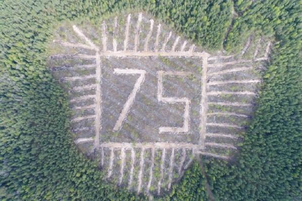 Сеянцы ели высадили так, чтобы получилось число 75
