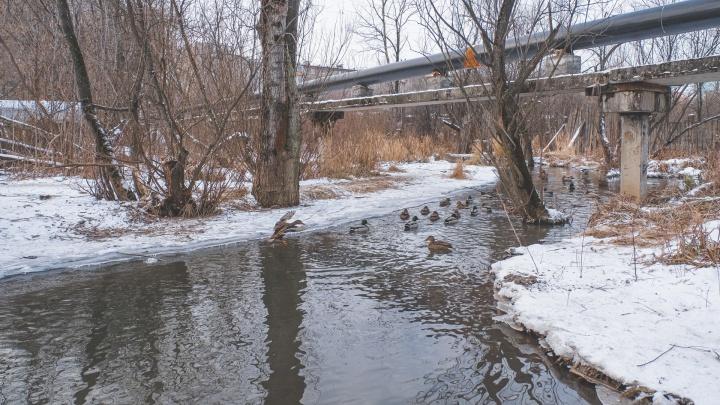С пешеходными мостиками и площадками для собак: какими станут долины Егошихи и Данилихи