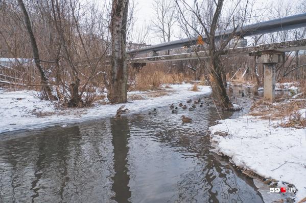 Утки — традиционные обитатели долин наших малых рек