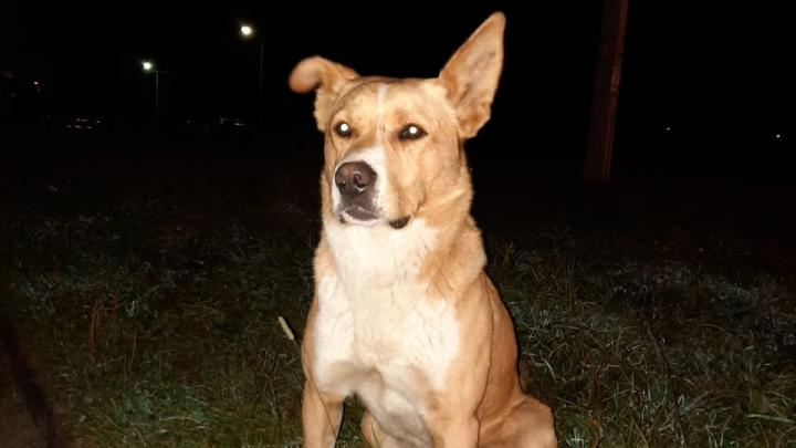 «Остались следы зубов»: в Ярославской области стая собак нападает на детей