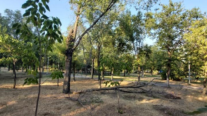 «Это не парк, а какая-то пустыня»: волгоградцы жалуются на благоустройство парка «Русь»