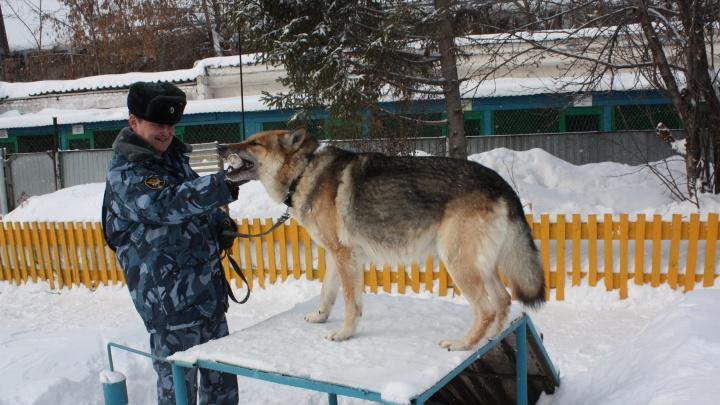 «Не давайте им зайти сзади»: кинолог — о гибели парня из Башкирии, которого загрызли бойцовские псы