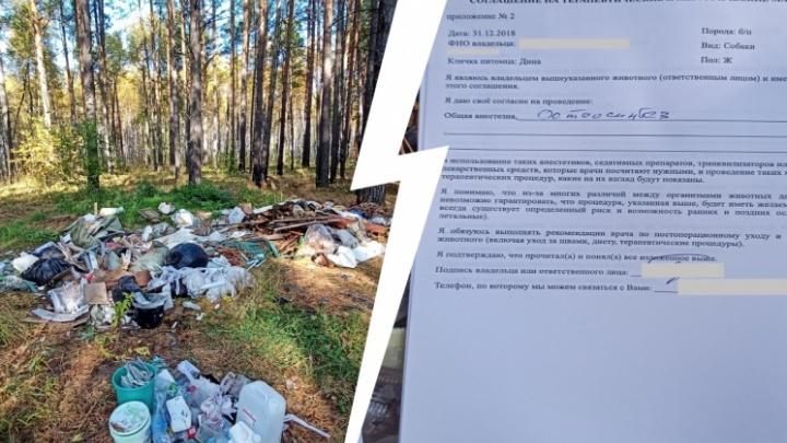 Установили виновного в том, что документы тюменской ветклиники с данными клиентов оказались в лесу