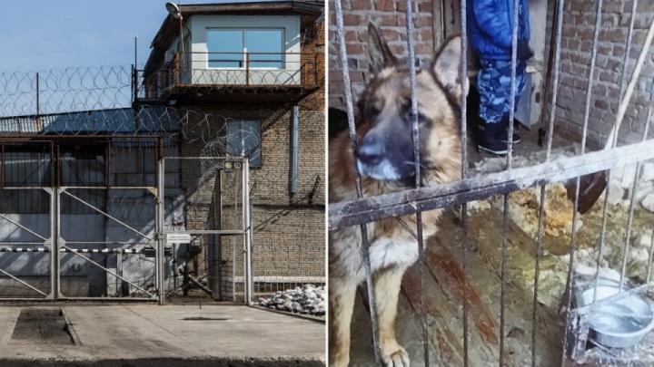 В Новосибирске кинологу, которую покусала служебная собака, выплатят по суду более 70 тысяч рублей