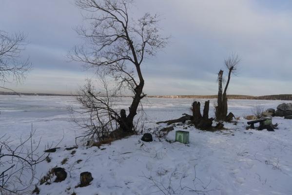 От раскидистых деревьев остались только пеньки и обломанные ветки