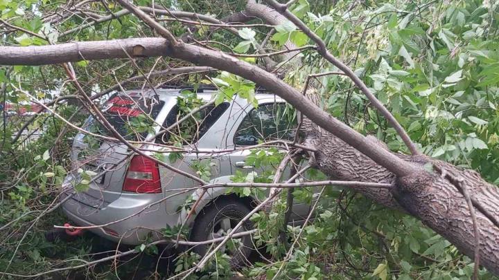 Во время ветра деревья рухнули на припаркованные в челябинском дворе машины
