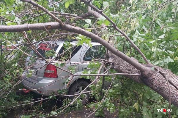 Упавшие деревья повредили пять машин во дворе дома на Кирова, 21