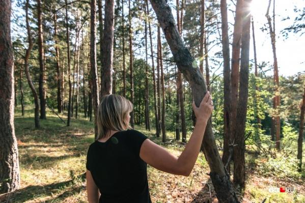 Жителей региона просят воздержаться от прогулок в лесах