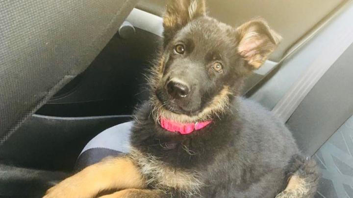 «Давайте улыбнёмся происходящему в лицо»: щенок из волгоградского ОМОНа покоряет инстаграм