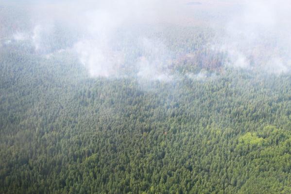 Площадь пожара достигла 110 гектаров