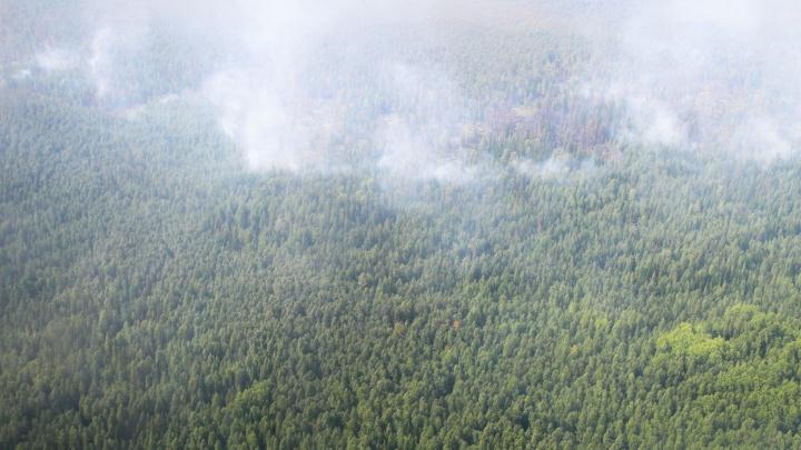 12 десантников-пожарных тушат пламя в северных лесах области на площади, равной 50 футбольным полям