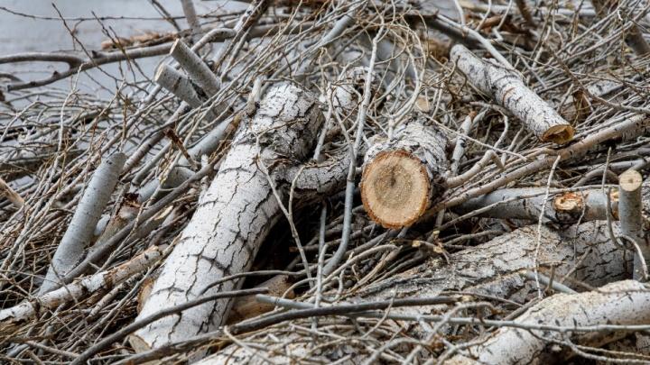 «Освобождают места для торговых точек»: почему чиновникам Волгограда выгодно рубить здоровые деревья