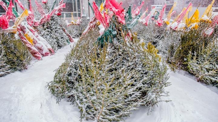 «Везли как преступников»: в Перми полиция задержала супругов из-за елки, которую они купили без чека