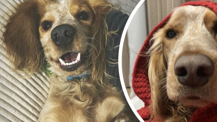 Отца и сына из Тюмени подозревают в убийстве породистого пса Флоки