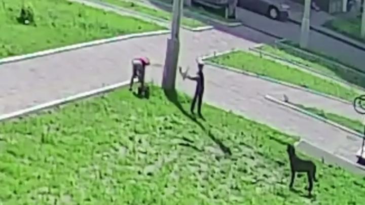 «Нас чуть не камнями закидать хотят»: отец мальчика, бросившего кошку стае собак, рассказал свою версию
