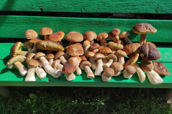 Это наш фаворит: в Лукино — лучшее место для сбора белых грибов, что ли?