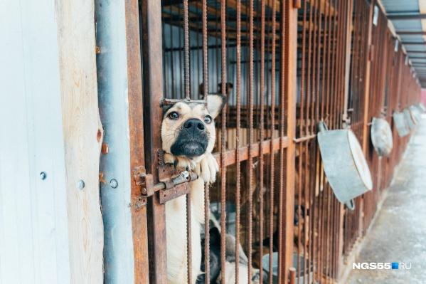 Собаки приюта очень ждут, когда их заберут домой. Или хотя бы ласково потреплют по носу