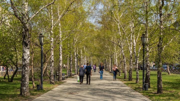 Аномальная жара или тоскливый холод? Изучаем прогноз погоды в Новосибирске на май