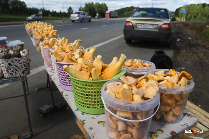 На выезде из Екатеринбурга тоже есть грибные места