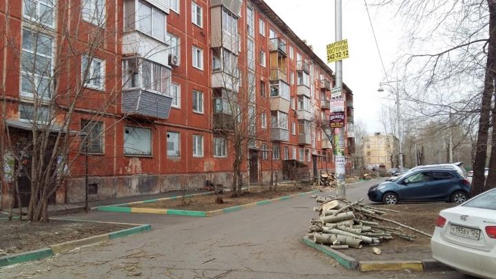 «Устроили пилораму»: во дворах Красноярска началась варварская обрезка деревьев