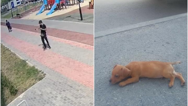 Тюменцы приютили щенка, которого жестоко избил хозяин (это попало на видео)