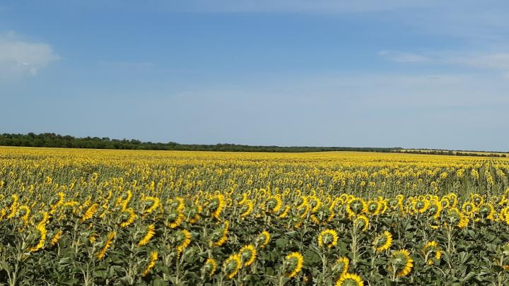 В Волгоградской области ввели режим ЧС из-за гибели урожая