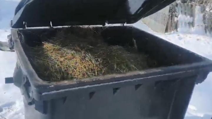 Регоператор просит волгоградцев не заваливать свежим навозом контейнеры для мусора