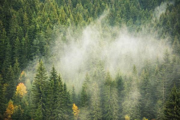 Дым от лесных пожаров содержит микроскопическую пыль, которая проникает в организм