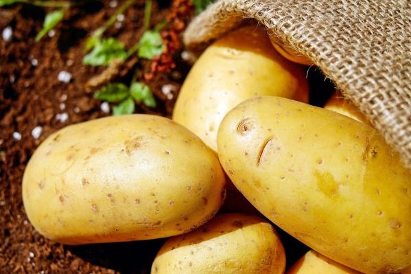 В сети рассказали, как они выращивают семенной картофель и следят за его качеством