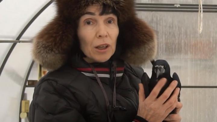 «Я мама ворон, Баба-яга современная»: пенсионерка из Башкирии создала «гостиницу» для птиц