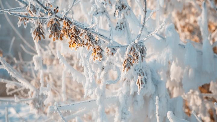 В Кузбасс идут аномальные морозы: синоптики рассказали о погоде в первую неделю января
