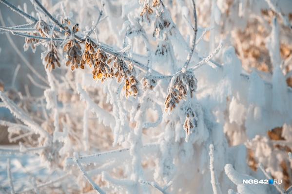 Причина аномально холодной погоды— в монгольском антициклоне