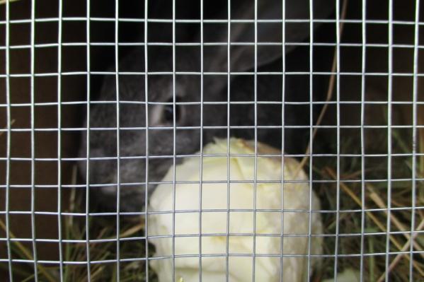 Кролики понадобились Самарской станции переливания крови как лабораторные животные
