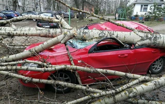 «Налейте водки»: в Ярославле ветер повалил деревья. Раздавило иномарку. Фото