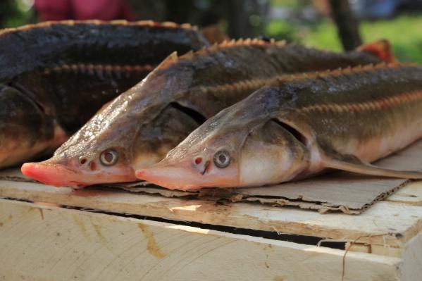 Полиция изъяла у рыбаков, незаконно ловивших рыбу, три километра сетей и несколько моторных лодок
