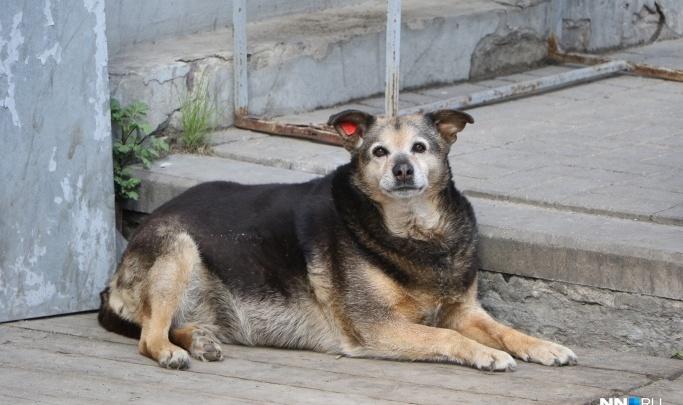 «Зоозащита НН» отказалась регулировать численность бездомных животных в Нижнем Новгороде