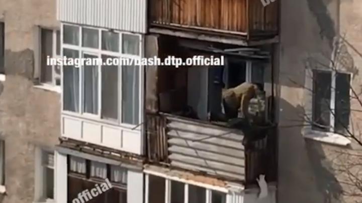 Уфимец, рискуя жизнью, спас котенка с балкона, очевидец снял это на видео