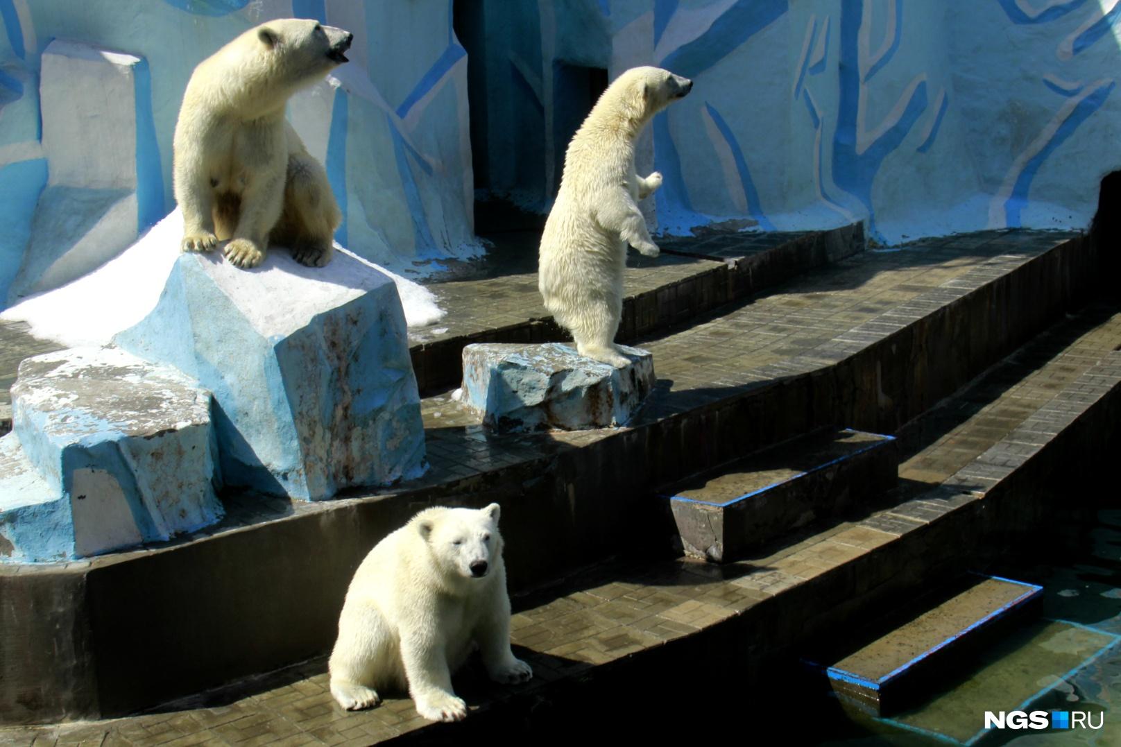 Герда с подросшими медвежатами