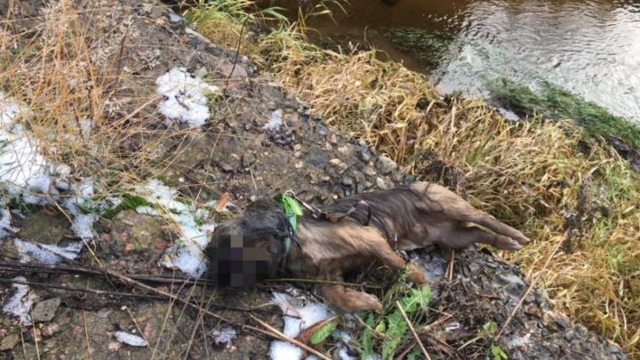Привязали к шее мешок с камнями: в Ярославле в реке нашли труп собаки