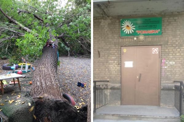 Дерево упало прошлой ночью рядом с детским садом на Урицкого, 7