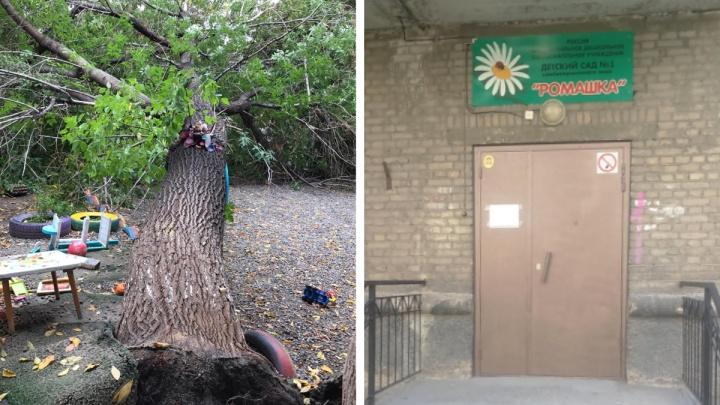 Просили убрать всё лето: рядом с детским садом в центре Новосибирска упал большой клён