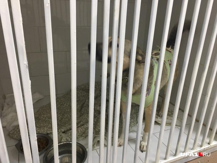 Во многих клиниках есть стационары, где животные отлеживаются после операции