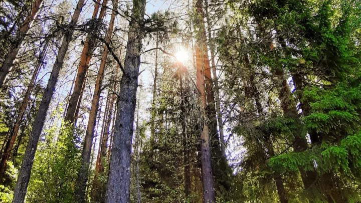 «Идите так, чтобы солнце светило в левое ухо»: как заблудившихся северян выводят из леса по телефону