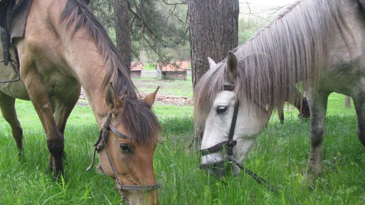 Турфирма из Башкирии выиграла президентский грант на защиту животных