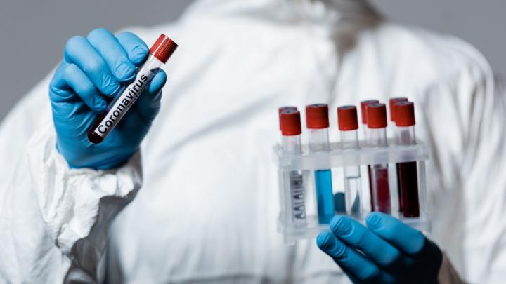 В Омске начали делать ПЦР-тесты на коронавирус для всех желающих