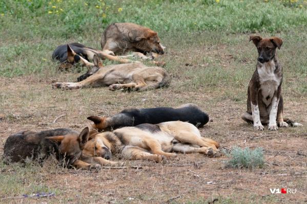 С начала весны бездомные животные оккупировали Волгоград и Волжский