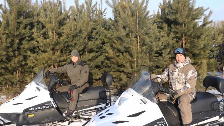 В крае начали проводить рейды по защите елок от вырубок