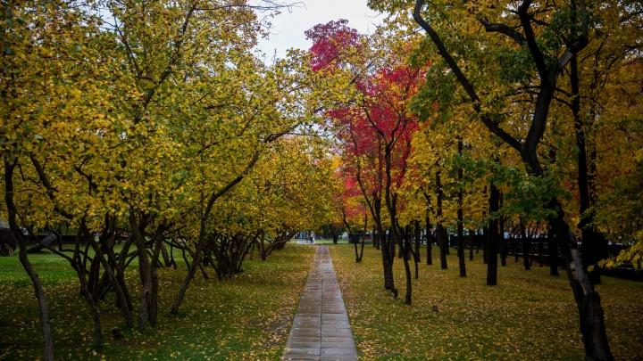 На Новосибирск идёт мощная волна холода