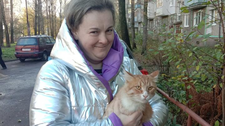 «Любит его больше всех»: в Ярославле кот на трамвае проехал через весь город, чтобы найти хозяина